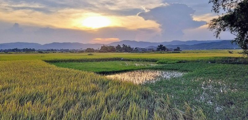 Tour-Tuy-Hoa-Phu-Yen-Intro-tours-&-trips-best-local-day-trips-in-Tuy-Hoa-Phu-Yen-sightseeing-tours-off-the-beaten-track-historical-tours-food-tours-with locals in Phu Yen IntroTrip